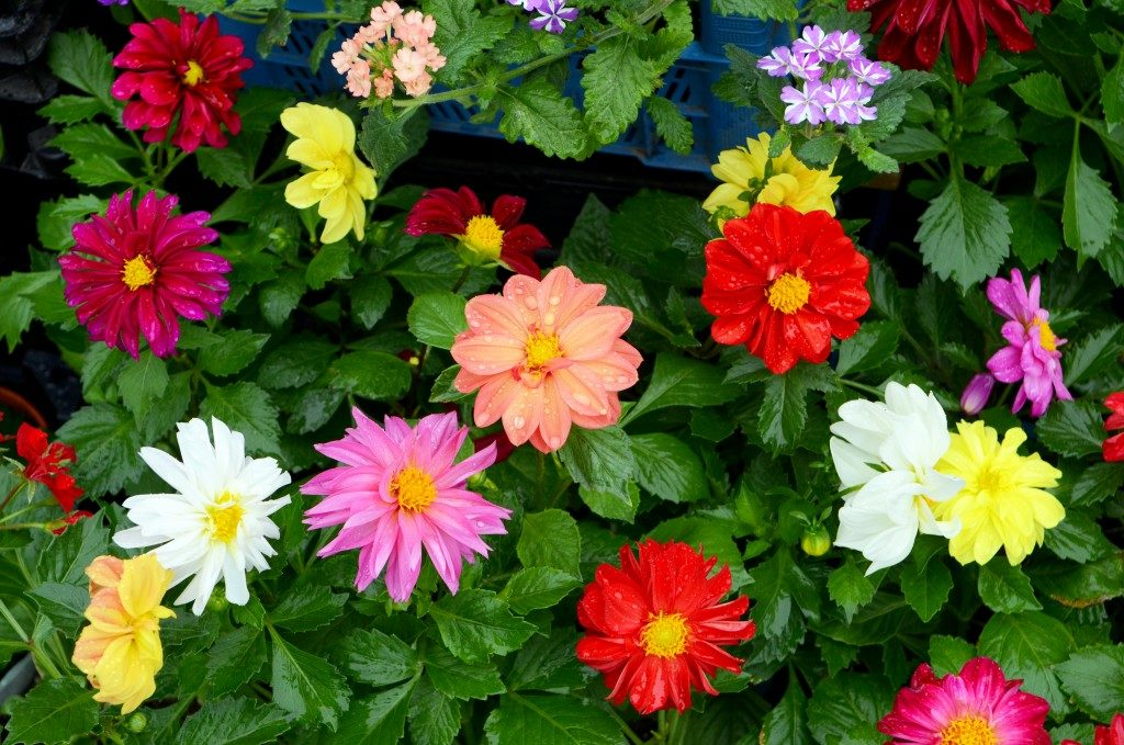 Flowers of different colors