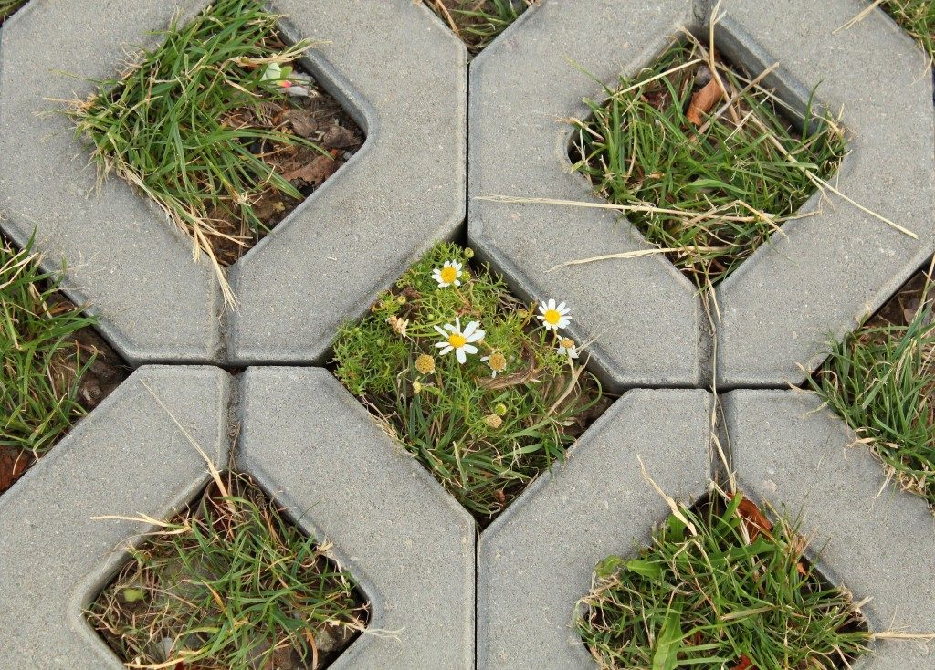 Roman Chamomile and Permeable Pavement