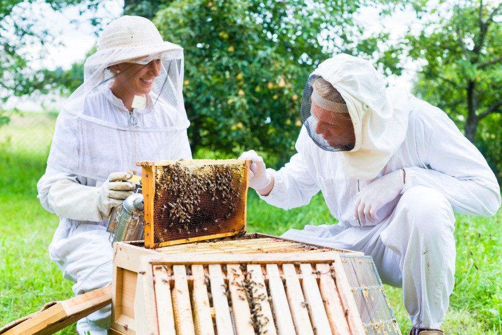 beekeepers handling bees