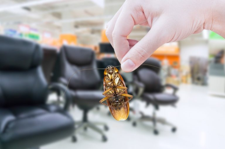 roach inside the office