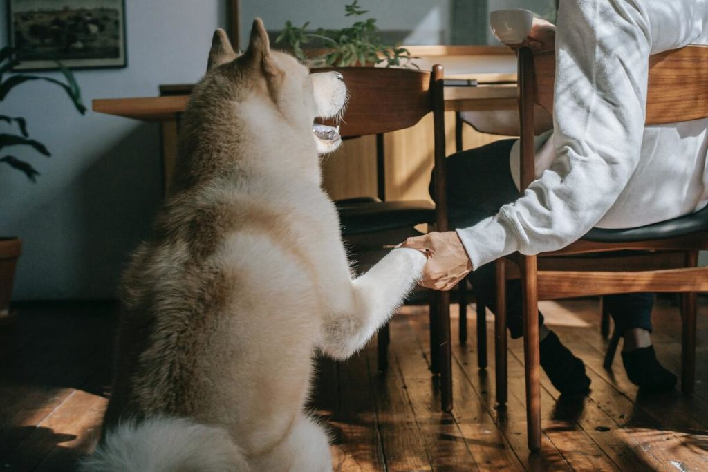 owner holding dogs paw