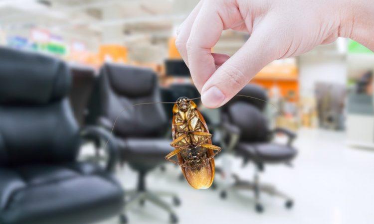 roach inside the office